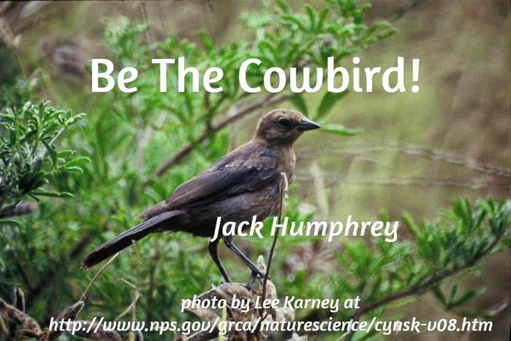 bethecowbird